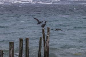 Tromso-20150313-8758lowRes