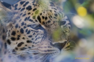 Walter-Zoo-70D-20150808-2143-lowRes