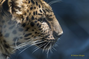 Walter-Zoo-70D-20150808-2404-lowRes