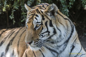 Walter-Zoo-70D-20150808-2720-lowRes