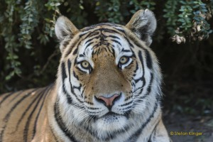 Walter-Zoo-70D-20150808-2725-lowRes
