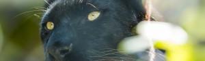 sliderbild-panther