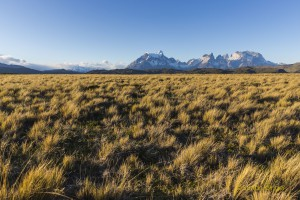 Patagonien-20151125-5D3-1527