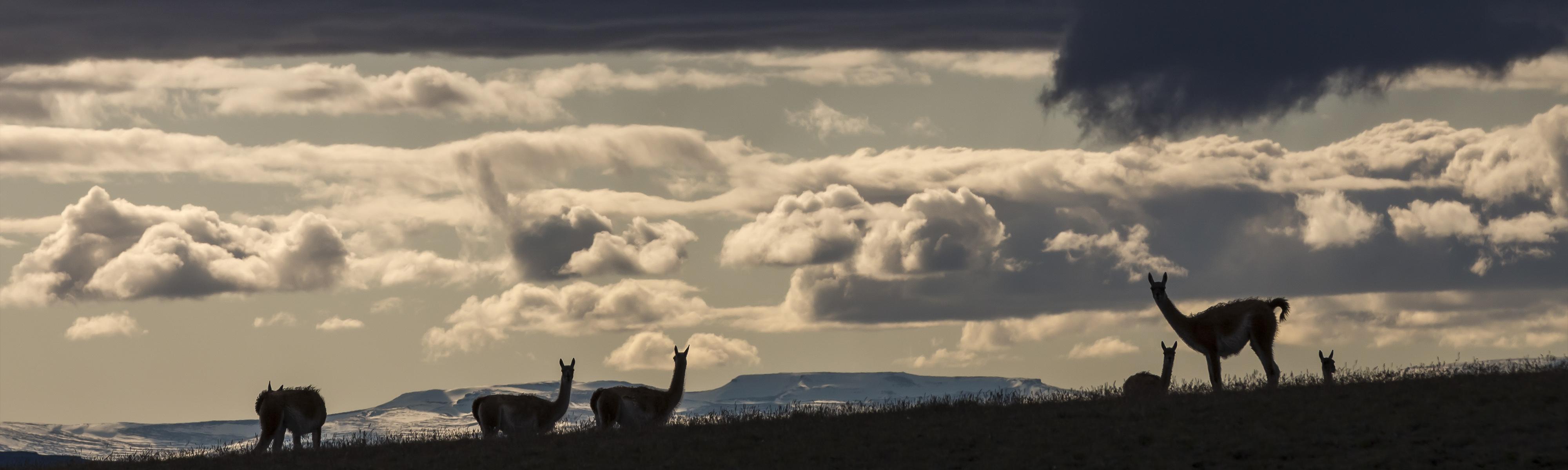 Slider Lamas in Abenddämmerung