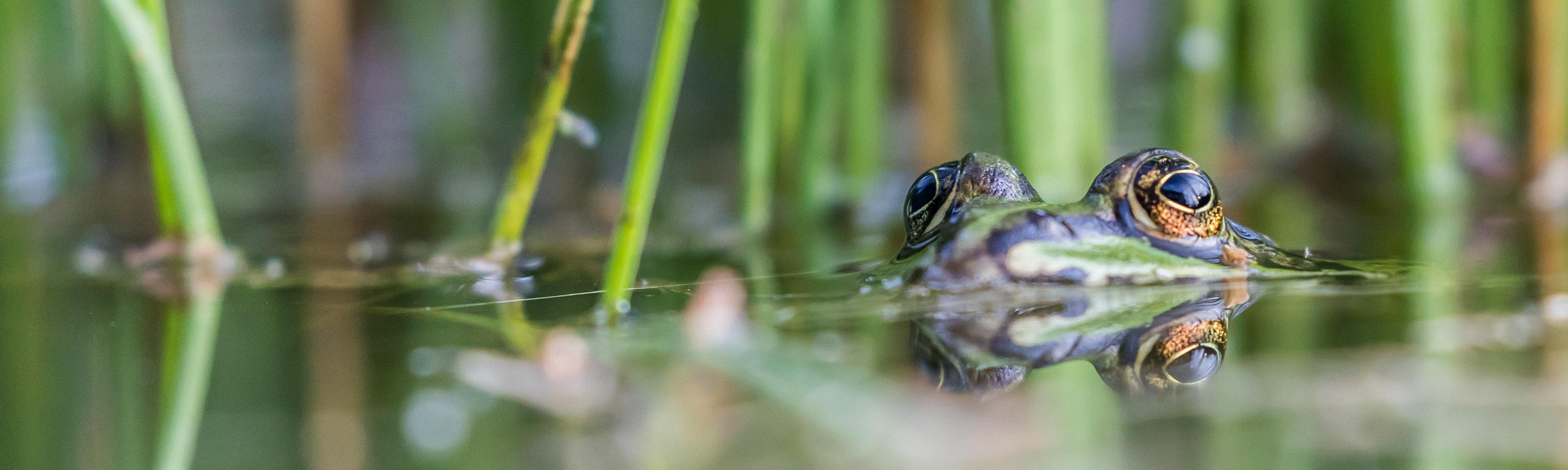 Sliderbild Frosch